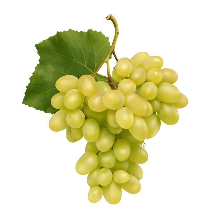 Hail Net Grapes