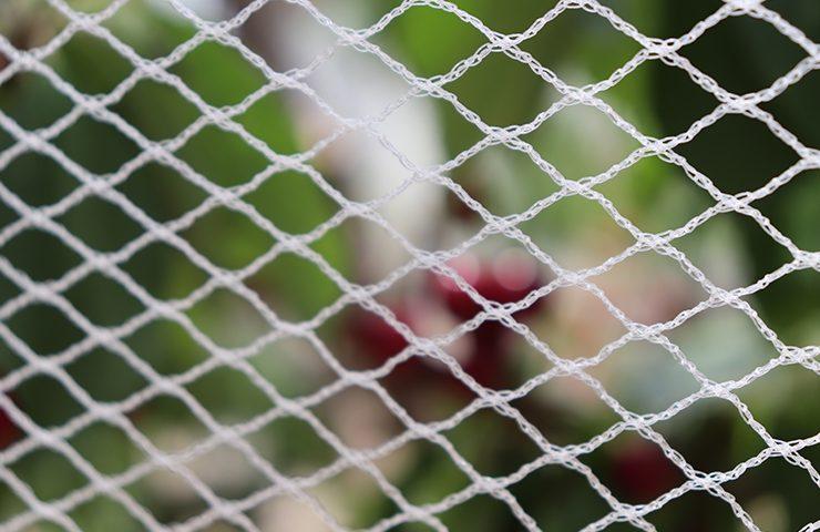 bird-net-2